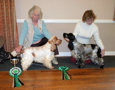 Cocker Puppy and Reserve Cocker Puppy of The Year 2011-2012
