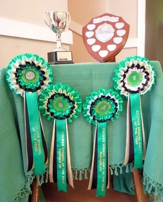 Rosettes for the Cocker of The Year competition